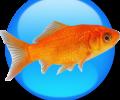 Goldfish 3.9