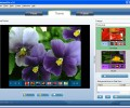Flash Gallery Builder 1.55