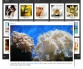 XML Grid Gallery DW Extension 1.0.0